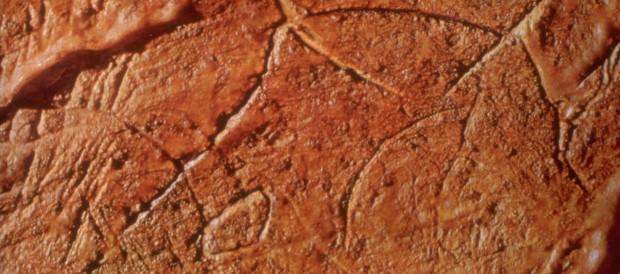 Gargas_grottes_gravures_conque_aurochs_préhistoire_gravettien